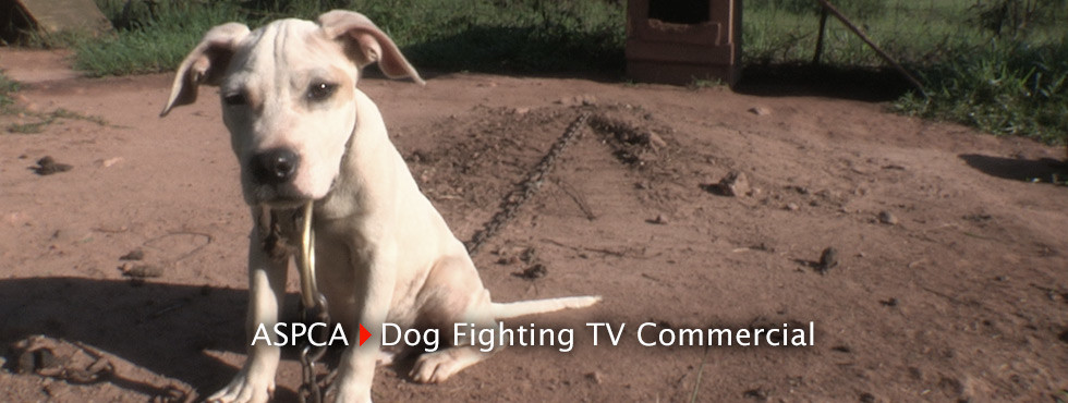 HOME-SLIDER-ASPCA-TV-Commercial-3
