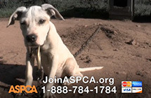 PROJECTS-ASPCA-5minfieldspot-2