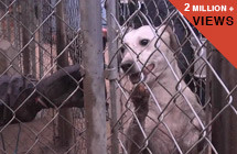 PROJECTS-ASPCA-COCONUT-2-million